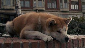 Смотреть фильм «Хатико: Самый верный друг» онлайн