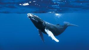 Смотреть фильм «Океаны» онлайн